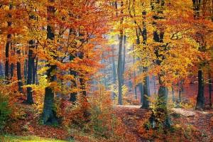 woods-1072819_640