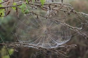 spider-web-1729190_640
