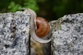 snail-1447233__180